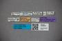 3048645 Oxytelus steelei ST labels IN
