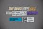 3048646 Oxytelus strigosiceps ST labels IN