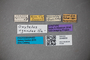 3048659 Oxytelus ugandae ST labels IN