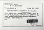 Ephemeropsis tjibodensis K. I. Goebel, Fiji, R. M. Schuster 67-70101d, F (Supported by National Science Foundation DBI-1458300)
