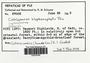 Cololejeunea blepharophylla Pócs, Fiji, R. M. Schuster 57008, F (Supported by National Science Foundation DBI-1458300)