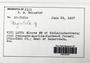 Plagiochila (Dumort.) Dumort., Fiji, R. M. Schuster 67-7520a, F (Supported by National Science Foundation DBI-1458300)