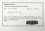 Plagiochila (Dumort.) Dumort., Fiji, R. M. Schuster 67-7534c, F (Supported by National Science Foundation DBI-1458300)