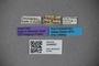 3048660 Thinobius bacillus ST labels IN