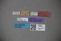 3048664 Thinobius garreisi ST labels IN