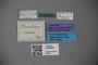 3048670 Thinobius morio ST labels IN