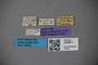3048671 Thinobius nitidulus ST labels IN