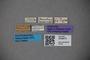 3048675 Thinobius piceus ST labels IN