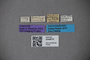 3048676 Thinobius pulchripennis ST labels IN