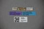 3048677 Thinobius richteri HT labels IN