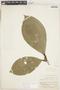 Clidemia juruensis (Pilg.) Gleason, PERU, F