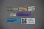 3048678 Trogophloeus brasilianus ST labels IN