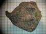 Siparuna thecaphora (Poepp. & Endl.) A. DC., Mexico, M. Rosas R. 1369, F