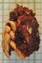 Carludovica palmata Ruíz & Pav., Belize, K. Cosentino 157, F
