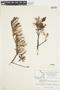 Salix glauca L., Canada, J. W. Thieret 9366, F