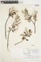 Salix glauca L., Canada, J. W. Thieret 9394, F