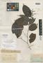 Eugenia quitarensis Benth., BRITISH GUIANA [Guyana], R. H. Schomburgk 547, Isotype, F