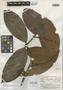 Eugenia sigillata McVaugh, BRITISH GUIANA [Guyana], A. C. Smith 2912, Isotype, F