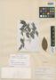 Myrcia aguitensis Gleason, VENEZUELA, G. H. H. Tate 868, Isotype, F