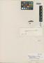 Myrcia canescens O. Berg, BRAZIL, J. B. E. Pohl 343, Isotype, F