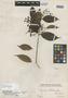 Myrcia chilensis O. Berg, PERU, E. F. Poeppig 138, Isotype, F
