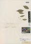 Myrcia ciarensis O. Berg, BRAZIL, G. Gardner 1619, Isotype, F
