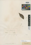 Myrcia cucullata O. Berg, COLOMBIA, J. W. K. Moritz 1179, Isotype, F