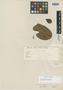 Myrcia eugenioides Cambess., BRAZIL, A. F. C. P. de Saint-Hilaire, Isotype, F