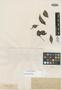 Myrcia fastigiata Kiaersk., BRAZIL, A. F. M. Glaziou 17677, Isotype, F