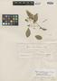 Myrcia gardneriana O. Berg, BRAZIL, G. Gardner 2605, Isotype, F