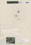 Myrcia hiemalis Cambess., BRAZIL, A. F. C. P. de Saint-Hilaire, Isotype, F