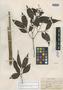 Myrcia leptoclada var. glazioviana Kiaersk., BRAZIL, A. F. M. Glaziou 9441, Isosyntype, F