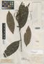 Myrcia lindeniana O. Berg, COLOMBIA, J. J. Linden 808, Isotype, F