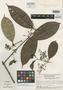Myrcia myriantha McVaugh, BRITISH GUIANA [Guyana], S. S. Tillett 45013, Isotype, F