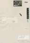 Myrcia oleifolia Cambess., BRAZIL, A. F. C. P. de Saint-Hilaire, Isotype, F