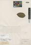 Myrcia phaeoclada var. alagoensis O. Berg, BRAZIL, G. Gardner 1295, Isotype, F