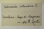 Italy, R. Corti s.n. (Accession number: none)