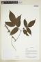 Herbarium Sheet V0375875F