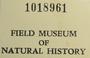 U.S.A. (Utah), C. M. Wetmore 16572 (Accession number: 1018961)