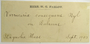 U.S.A. (Massachusetts), W. G. Farlow s.n. (Accession number: 1235838)