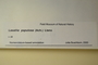 U.S.A. (West Virginia), H. A. Allard 11013 (Accession number: none)