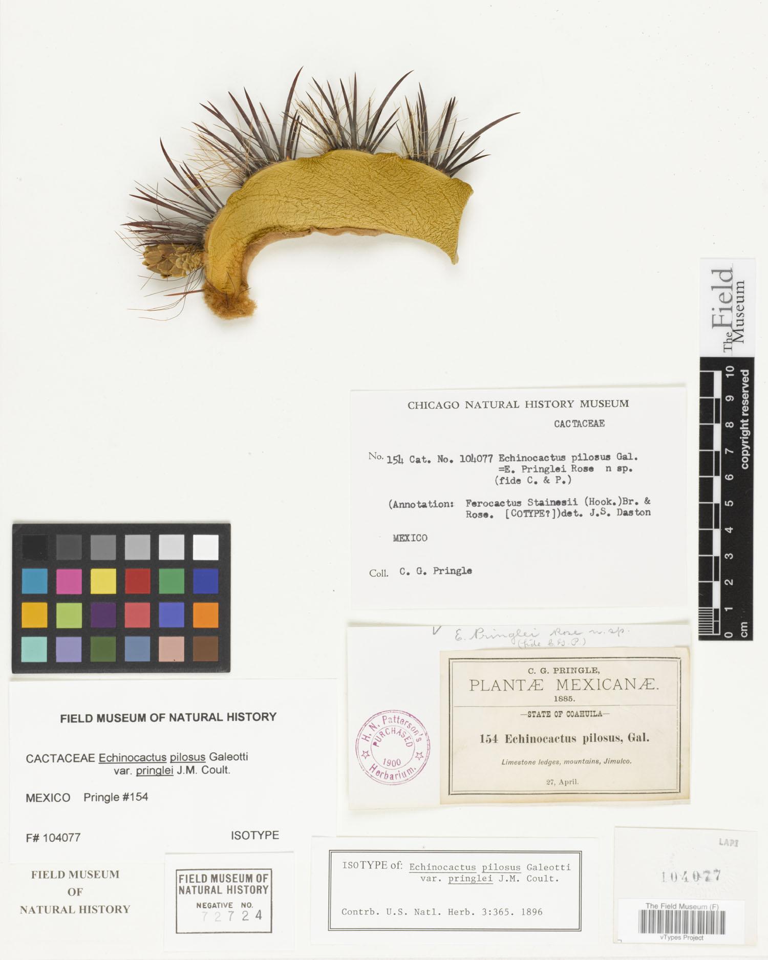 Ferocactus pilosus image