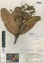 Sloanea crassifolia C. E. Sm., VENEZUELA, J. A. Steyermark 356, Holotype, F