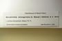 U.S.A. (Colorado), W. B. Kiener 8151 (Accession number: 1107023)