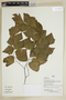 Herbarium Sheet C0675312F