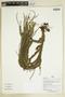 Herbarium Sheet C0675338F