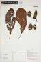 Herbarium Sheet V0375943F