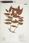 Herbarium Sheet V0386663F