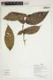 Herbarium Sheet V0386664F