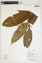 Herbarium Sheet V0386747F